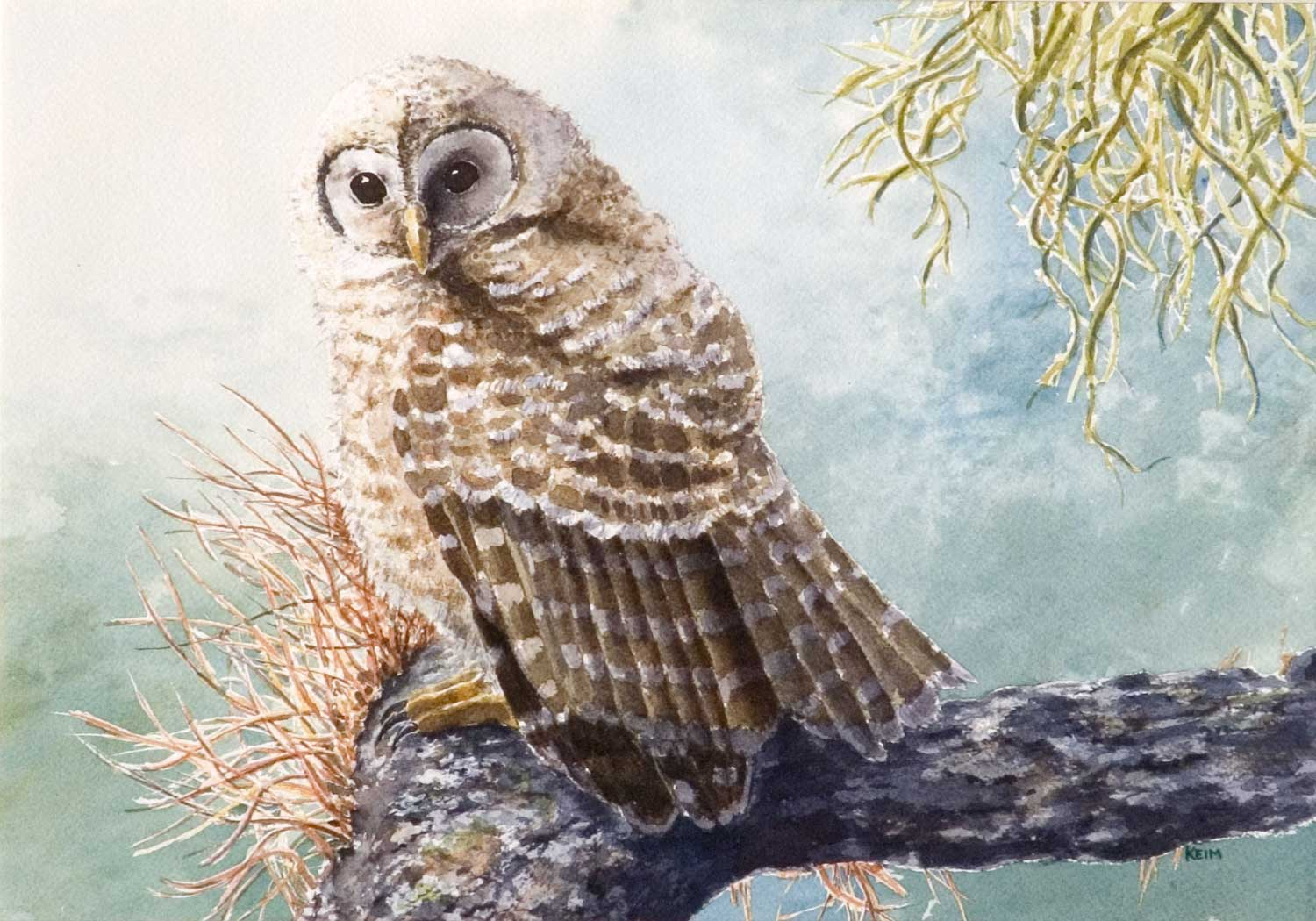 Young-Barred-Owl