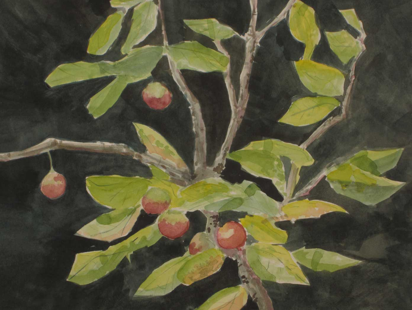 Crab-Apples-11-x-14-inches